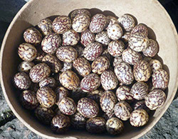 jacaranda jewels votre site de vente de bijoux naturels en graines 100 naturel 100 vegan. Black Bedroom Furniture Sets. Home Design Ideas